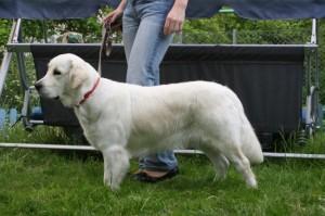 Psi Fryzjer Fiumi pies Wiki