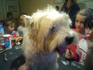 Psi Fryzjer Wizyta dzieci u groomera
