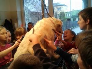 Psi Fryzjer Wizyta dzieci u groomera Golden